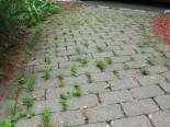 weeds in sidewalk cracks