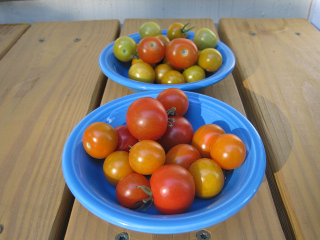 First batch of cherry tomatoes.  YUM!