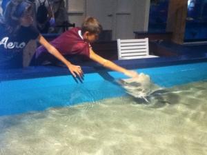 touching rays at Maritime Aquarium
