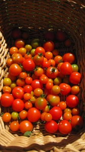 Organic cherry tomatoes grown with soil from our compost bin